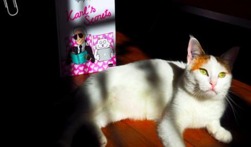 Rebellissime chats d'hier et d'aujourd'hui