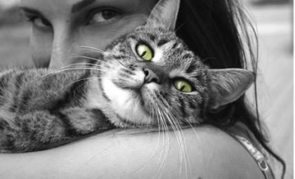 Rebellissime langages de chats